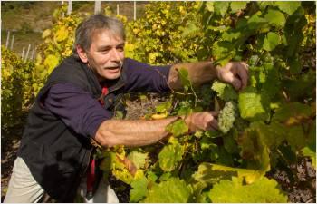 Aide exceptionnelle de 1,3 million pour le déclassement des vins AOC en vin de table
