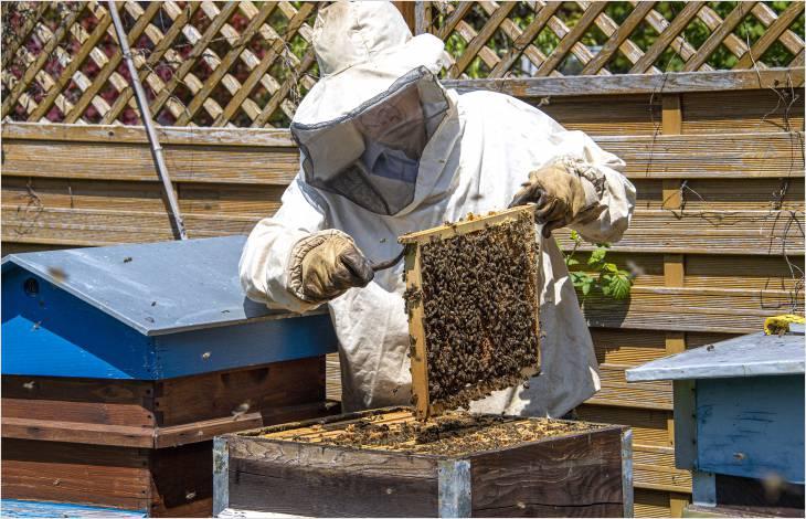Soutien à la branche apicole